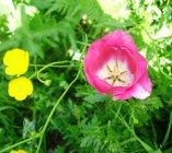 Urlaub Ascona und Blumenbilder St. Anton 2008 006